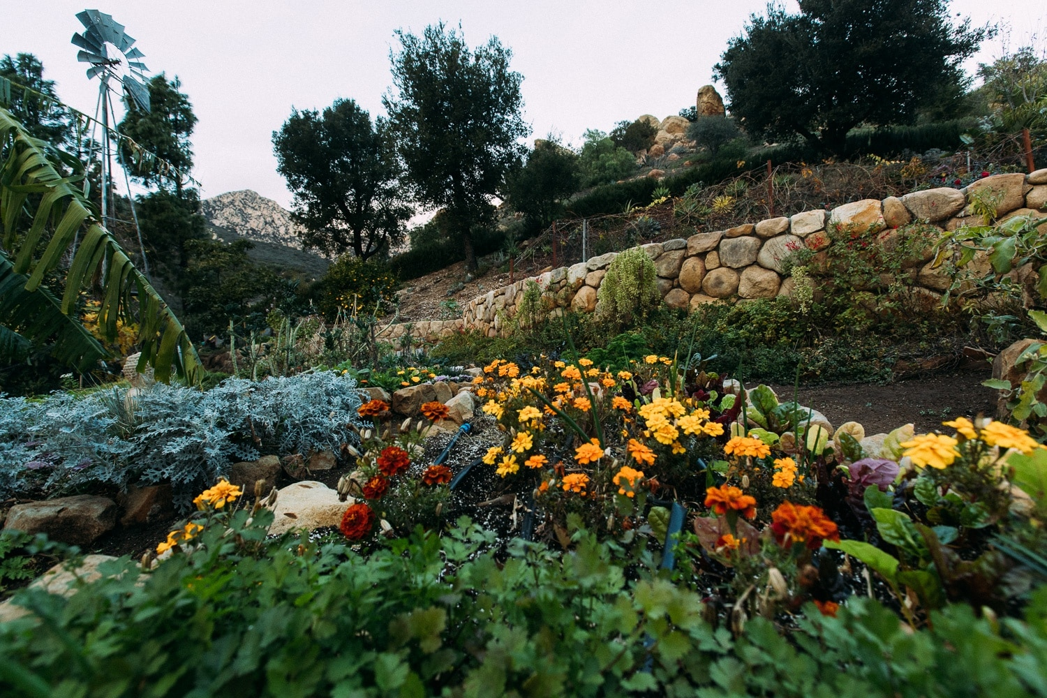 Stone Walls and Natural Gardens