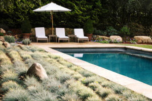 Swimming Pool Deck and Landscape