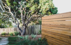 Contemporary Fence Design with Path